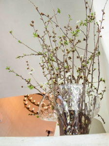White Blooming Cherry Branches in a Handblown Flared Vase