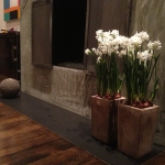 Paper Whites Narcissus papyraceus in Tall Bronze Pottery by Fireplace