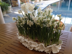 Paper White Centerpiece