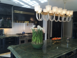 Paper Whites in Kitchen counter