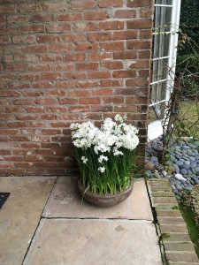 Paper Whites Outdoors Home Decor