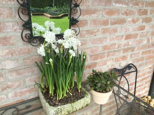 Paper White Narcissus papyraceus in a stone vase