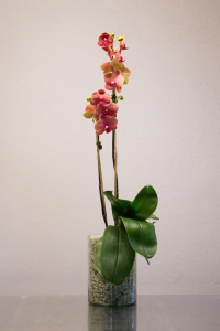 Orange/Purple Phalaenopsis Orchid in glass cylinder vase