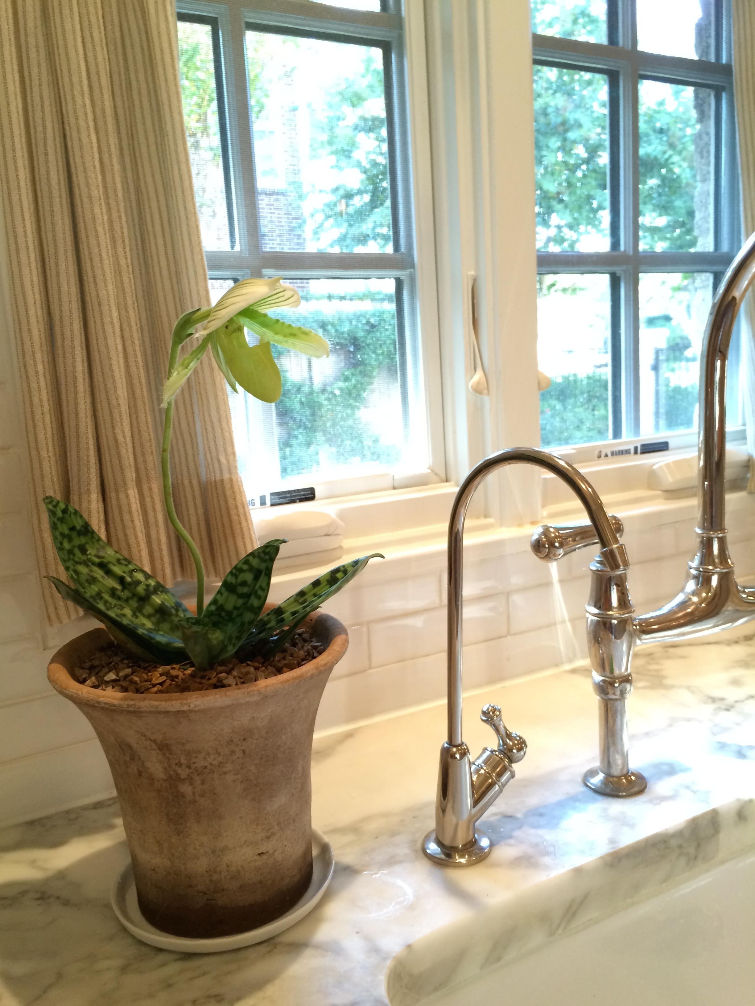 Custom orchid plants glenwood weber design houston tx for Orchid decor