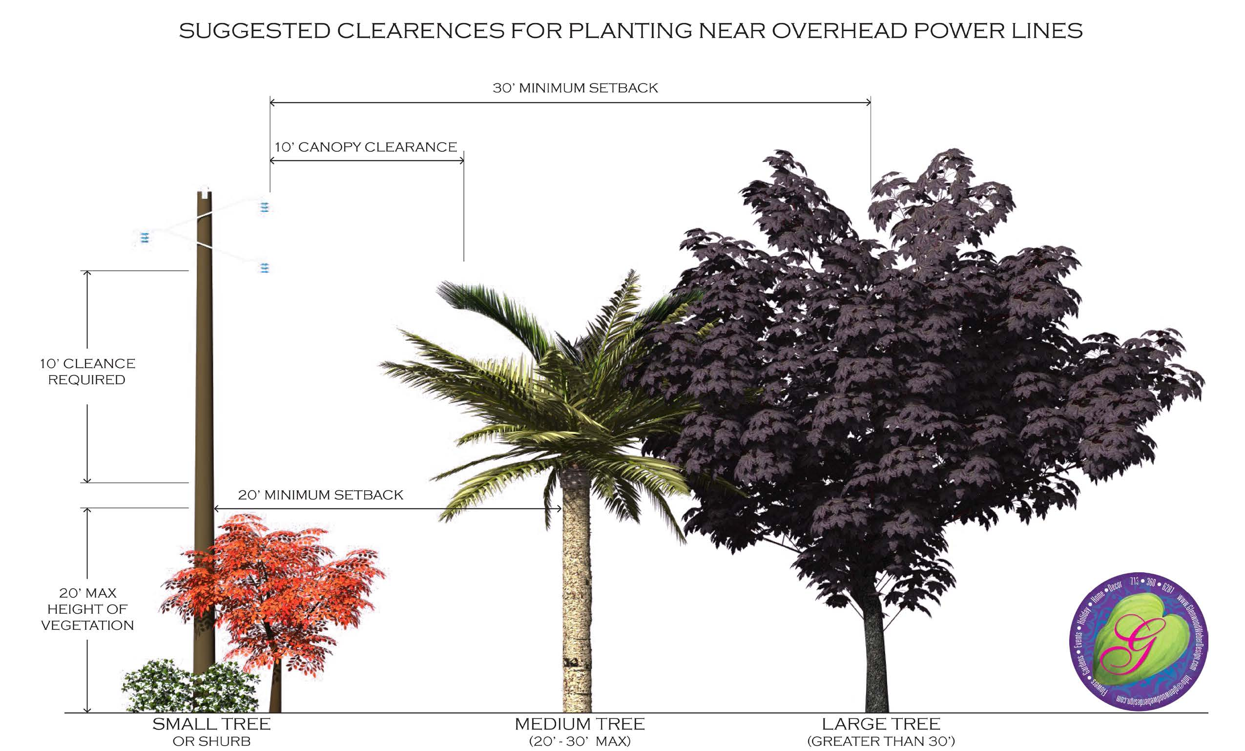 Power line safe tree choices houston tx by glenwood weber planting a tree to provide privacy from your neighbors behind you sciox Choice Image
