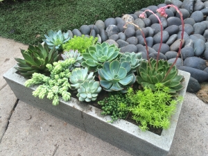 Botanical Art Concrete Box of Succulents