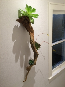 Wall Mounted View Botanical Art Sculpture of Ghost Wood and Succulents