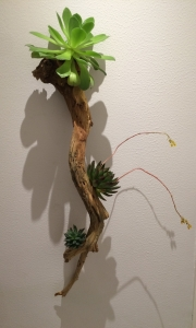 Botanical Art Wall Hanging Sculpture of Ghost Wood and Succulents