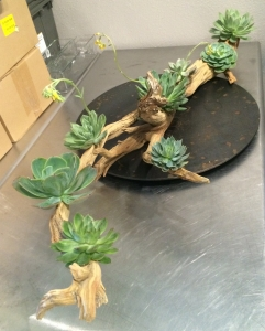 Botanical Art Displayed on Studio Design Table with Ghost Wood and Succulents