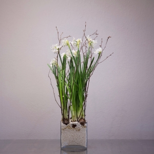 "8 Premium Paper White bulbs | 6"" Glass Bowl"