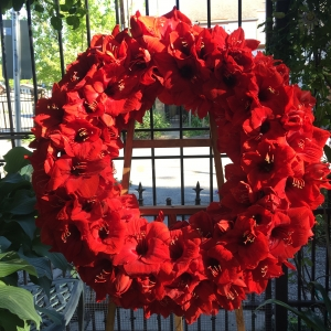 Sympathy Wreath with Red Amaryllis