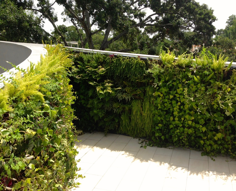 Green Wall Installations Glenwood Weber Design