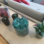 Mini Aloe Vera Beach Glass and Euphorbia