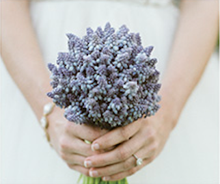 Bridal Bouquet with mass flower, blue mascar, and grape hyacinth